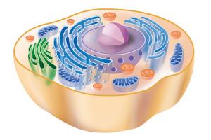 Criopreservacion celular
